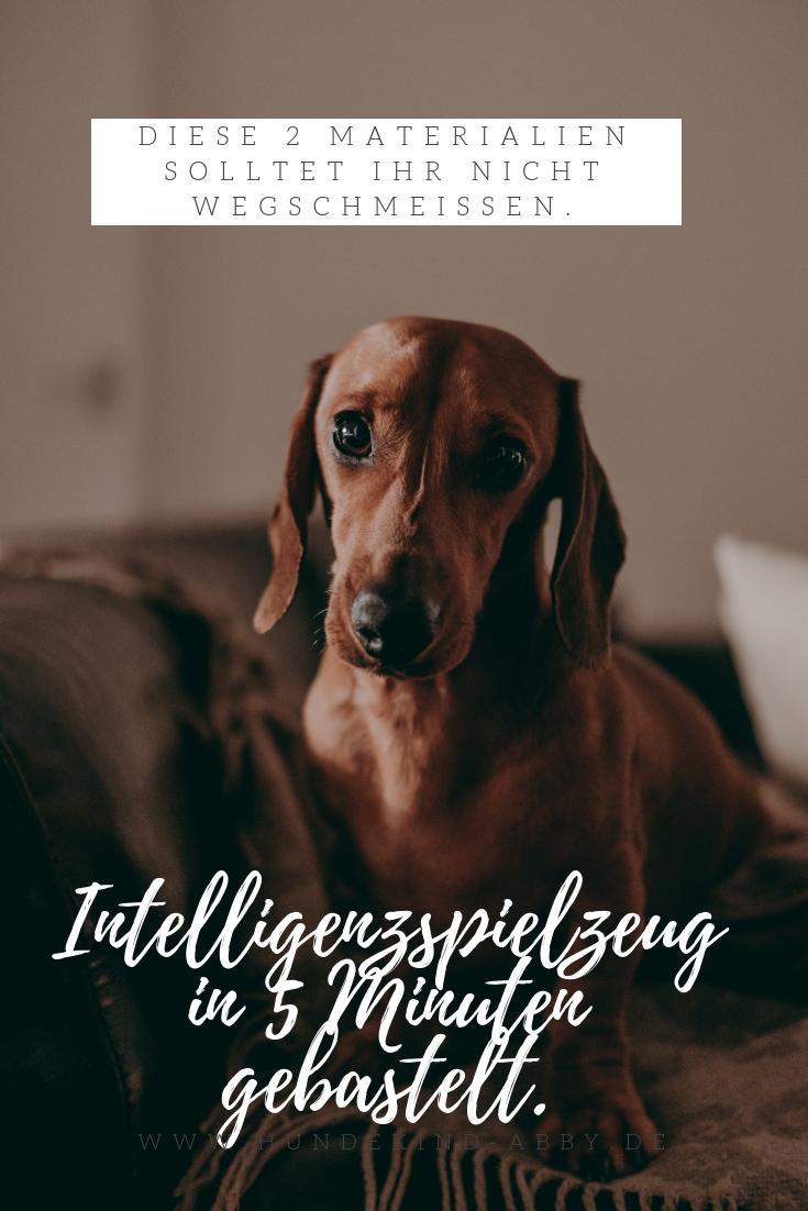 Ein Intelligenzspielzeug Einfach Selber Gemacht Hundekind Abby Hundeblog Intelligenzspielzeug Hund Hunde Hund Diy