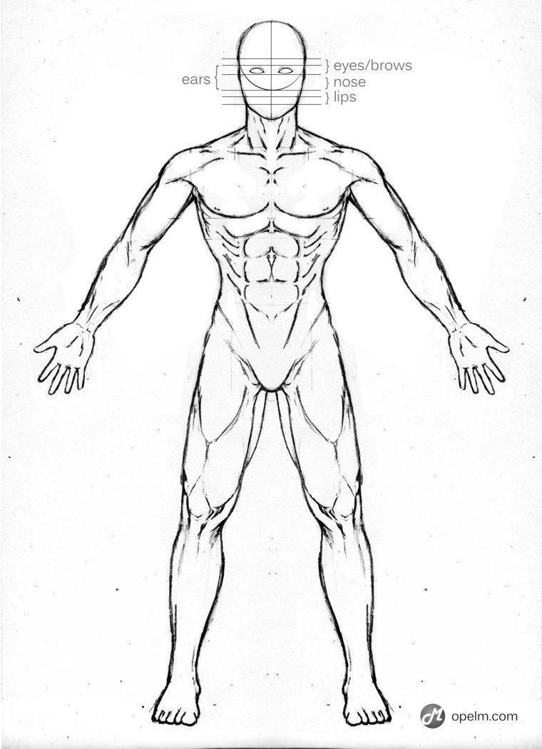male anatomy drawing - Google Search | Anatomía | Pinterest ...