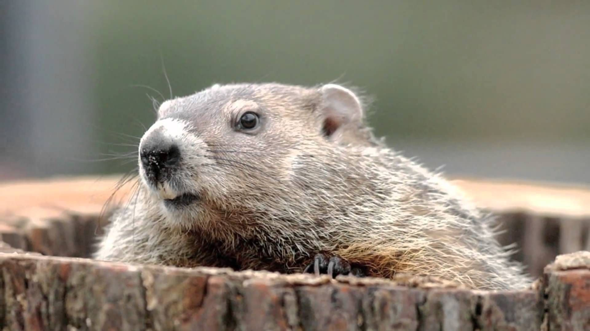 Info told with southern accent Kindergarten groundhog