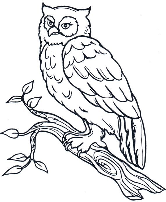 Pin By Marina On Ptichki Bird Coloring Pages Owl Coloring Pages Animal Coloring Pages