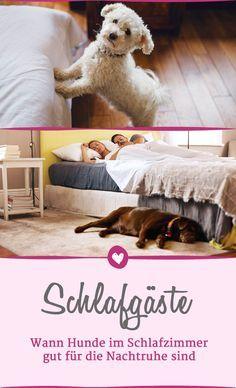 Darum können Sie Hunde ruhig im Schlafzimmer übernachten ...