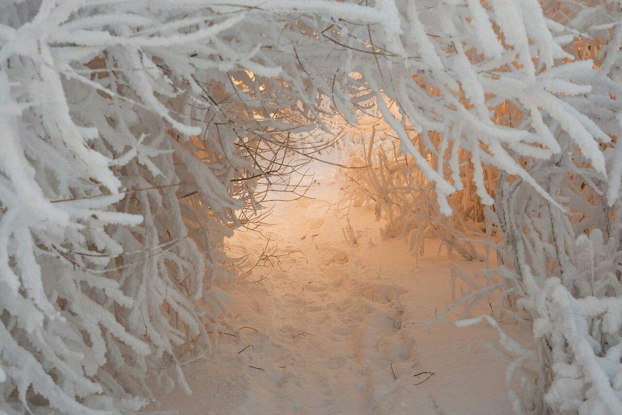 стандартный картинка белый снег пушистый подобранными карнизами