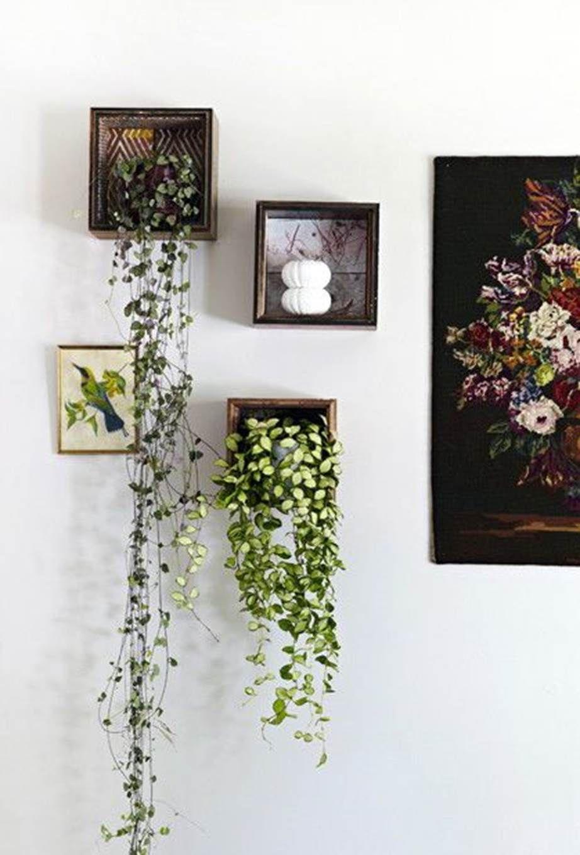 7 Best Ways To Display Indoor Plants Plant Decor Indoor Indoor Vines Hanging Plants Indoor