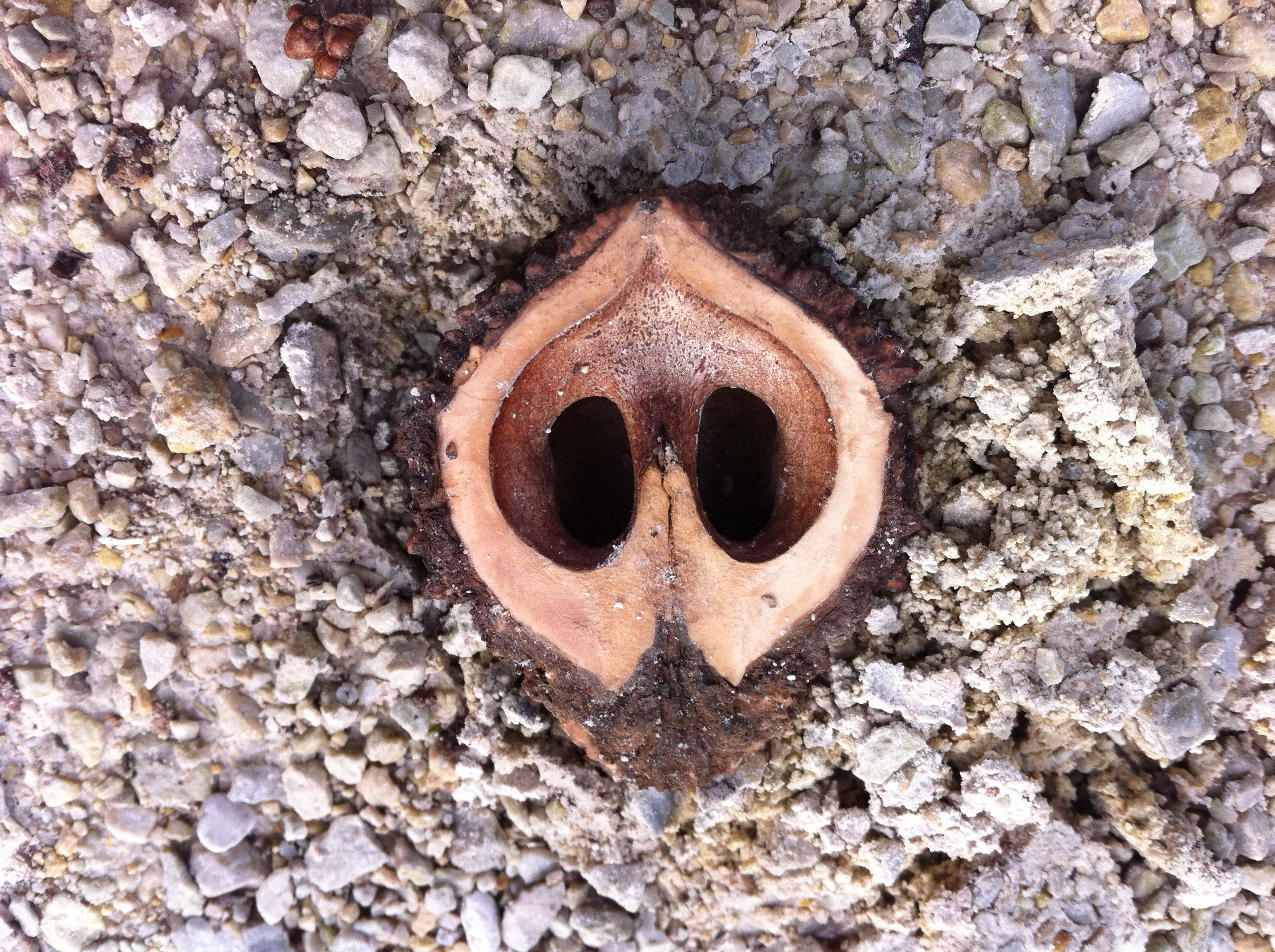 nut at forest preserve
