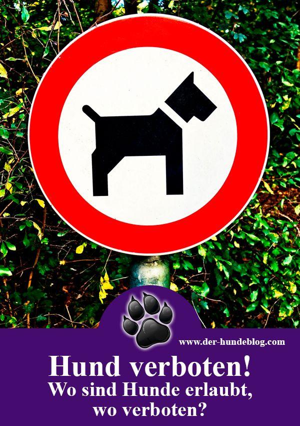 Gibt es Orte, wo Dein Hund verboten ist? Natürlich gibt es