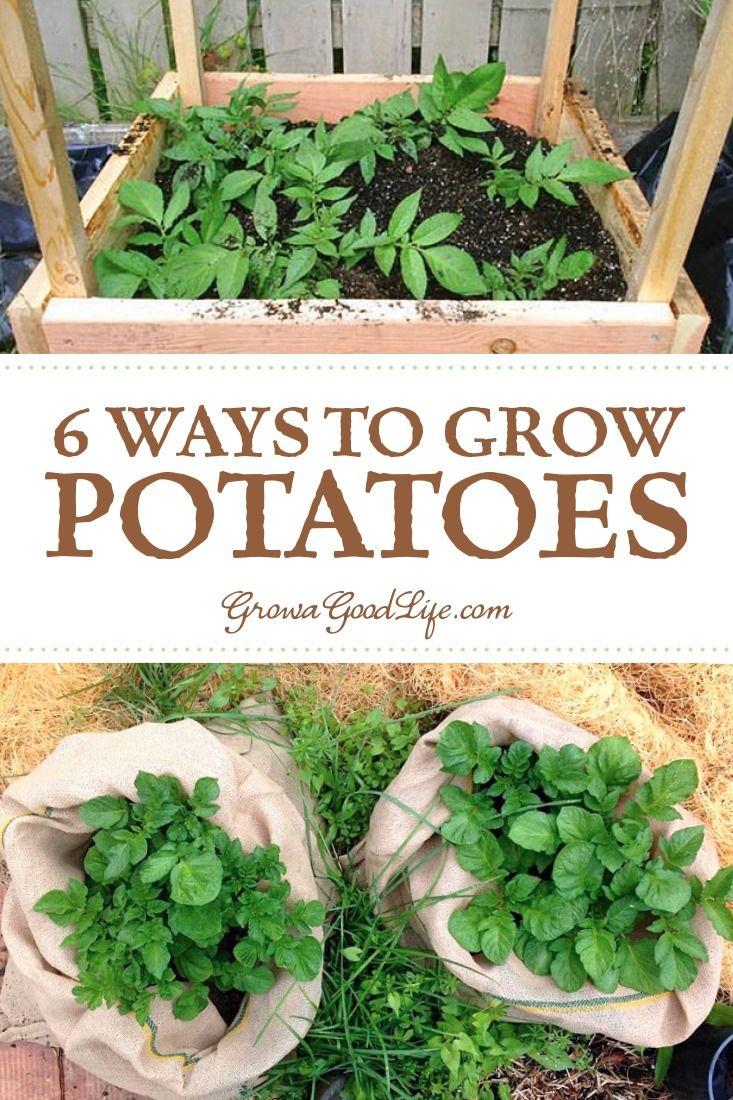 6 Ways To Grow Potatoes Potato Gardening Growing 640 x 480