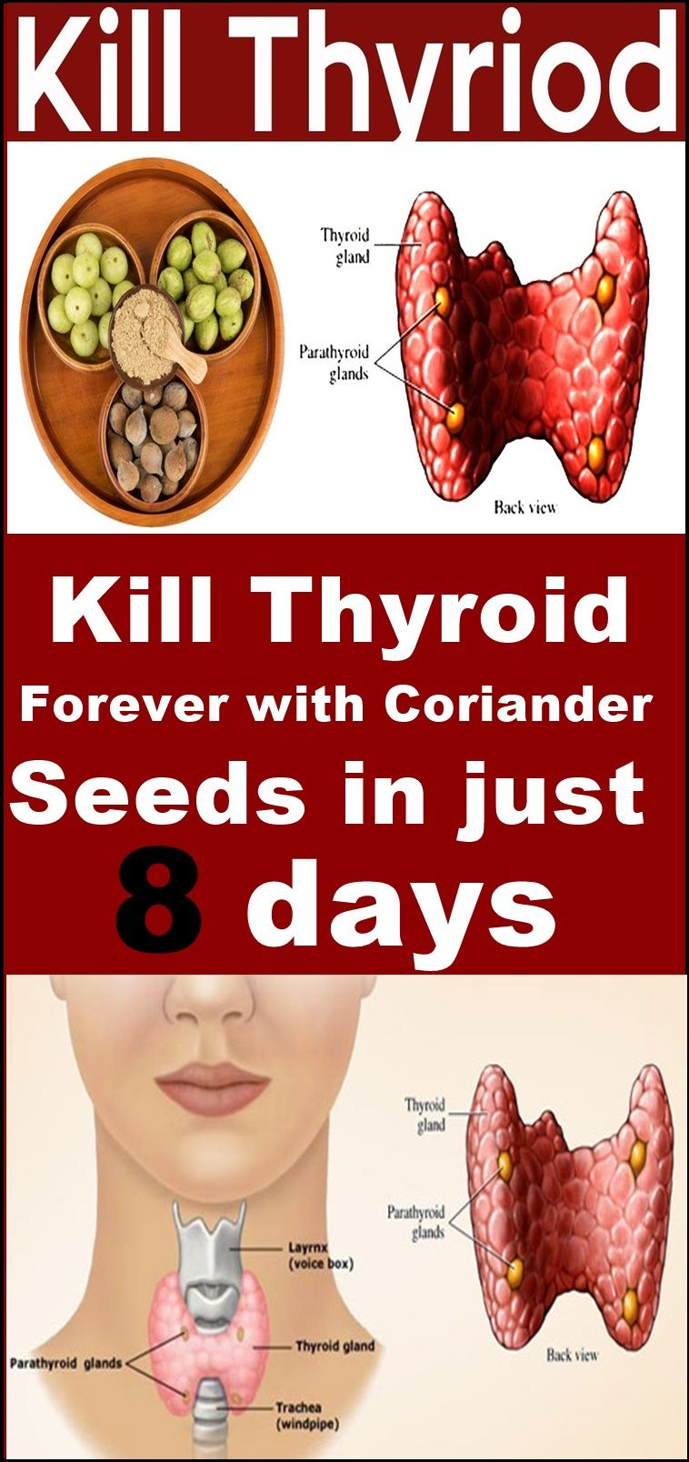 kill thyroid forever with coriander seeds in just 8 days