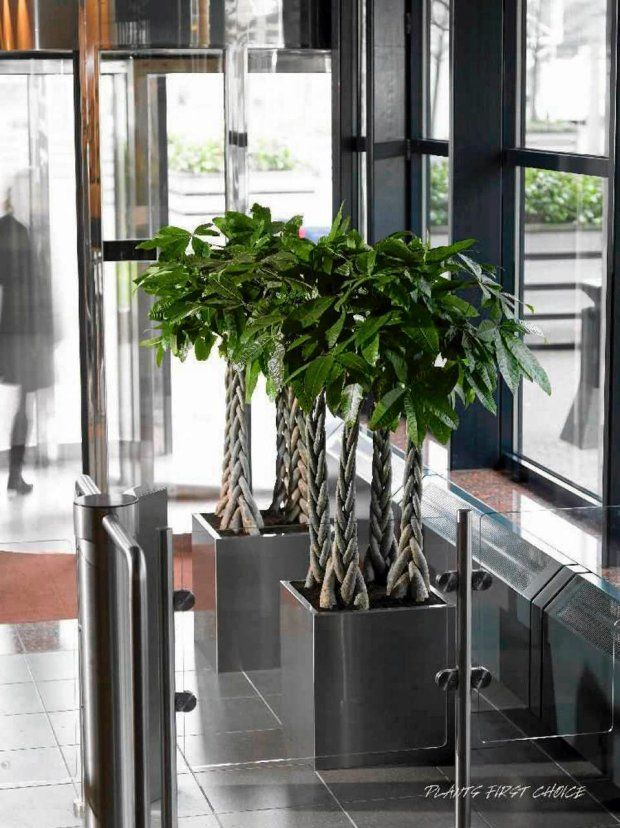 Duze Kwiaty Doniczkowe Do Nowoczesnych Wnetrz Plants