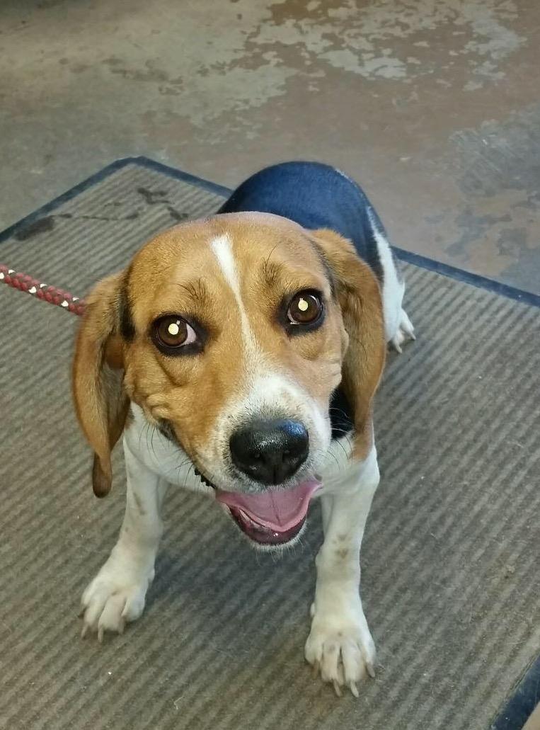 Puppies for adoption in ne ohio