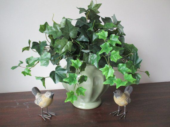 Ivy Plant Floral Arrangement Greenery Decor Foliage Arrangement Potted Plant Green Ceramic Home Accent 2 K24 is part of Ivy Plant decor - Large Ivy Plant Potted in Green Ceramic Container Centerpiece  Welcome to ForeverBloomsByLori where you will find beautiful products at great prices!  This luscious Ivy plant looks so real you're tempted to water it!   Finished on all four sides, it's beautiful vines would look great anywhere  in an office, den, bedroom, or wherever you need some plant life   The plant is professional grade quality, and has pretty dark green leaves with lighter new growth leaves,  just as Mother Nature's own   Measures 16  tall and 19  wide, in a ceramic green container with tiny brown specks   It's a year round accent that will give you years of enjoyment with no worries about watering!    With over 2000 happy customers, you can order with confidence   Ships in 13 business days in a recycled box   Thanks for visiting!   The flowers and plant are referred to as  silk    a description used throughout the industry to describe artificial flowers and plants   They are, however, made from a fabric blend of poly, rayon, acetate, or other fibers, not from silk