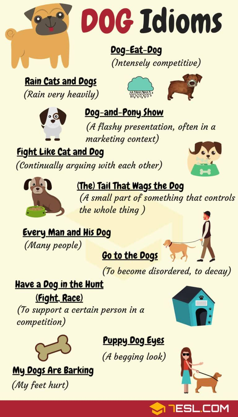 Dog Idioms 16 Useful Dog Idioms And Sayings English Idioms