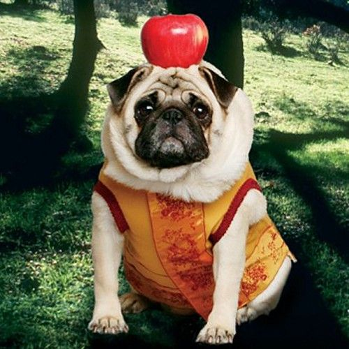 Cant I Just Eat The Apple Pugs Pinterest Pugs Dogs And Pug Love