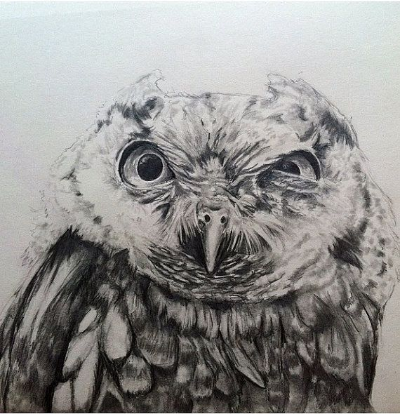 Screech owl stink eye pencil drawing by artbysarahengland