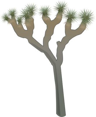 Yucca Brevifolia Joshua Tree Illustration Of Yucca Brevifolia Joshua Tree Symbol Vector Illustration Joshua Tree Yucca Joshua Tree Tree Illustration Shrubs