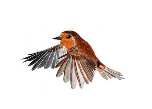Dessins d 39 oiseaux pic epeiche pinson des arbres rouge gorge regards illustration - Jeux d oiseau qui vole ...