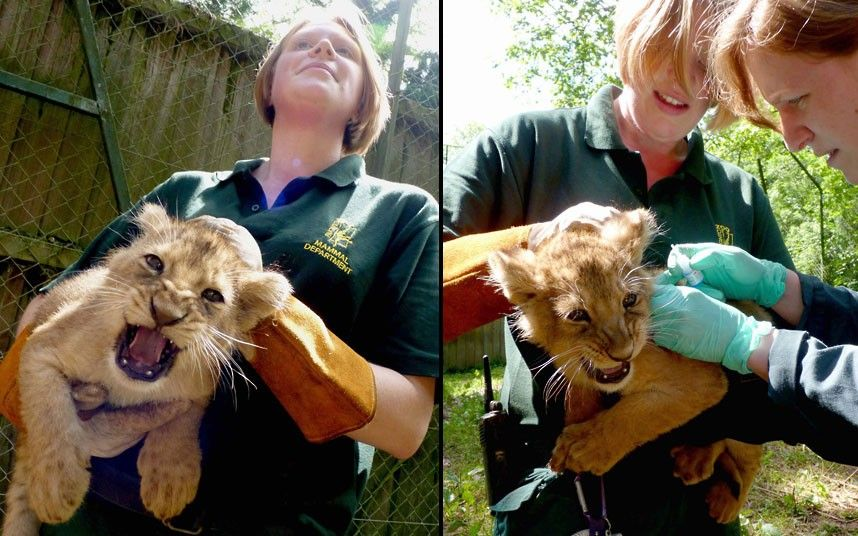 Environment Work With Animals Animals Pet Vet