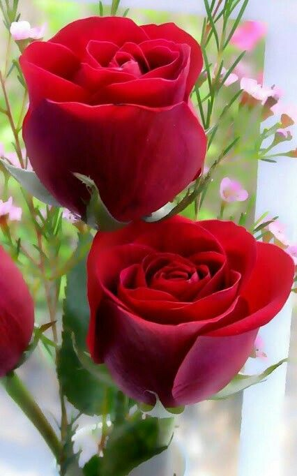 Pin By Zero Project On My Flowers Rose Flower Wallpaper Flower Images Free Good Morning Flowers