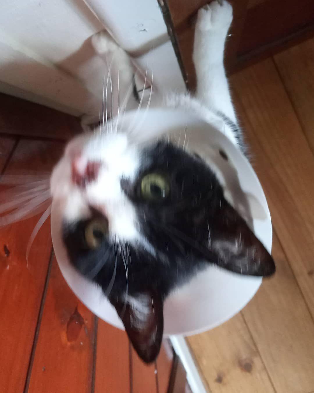 NEW12-Best-cats-cutest2019-Page-2of7  Boa noite!  #Hércules #Gato #CatsOfInstagram #Cutie #CatLover #ILoveMyCat #InstaCat #LoveCats #InstaGato #Catstagram #LoveKittens #InstaKitty #MeuGato #InstagramCat #CatPic #Adorable #Kitties #VidaDeGato #GatosDoInstagram #GatoFofo #AmoPet #CatPhoto #LovePet #InstaCute #Pet #PicOfTheDay #PhotoDaily