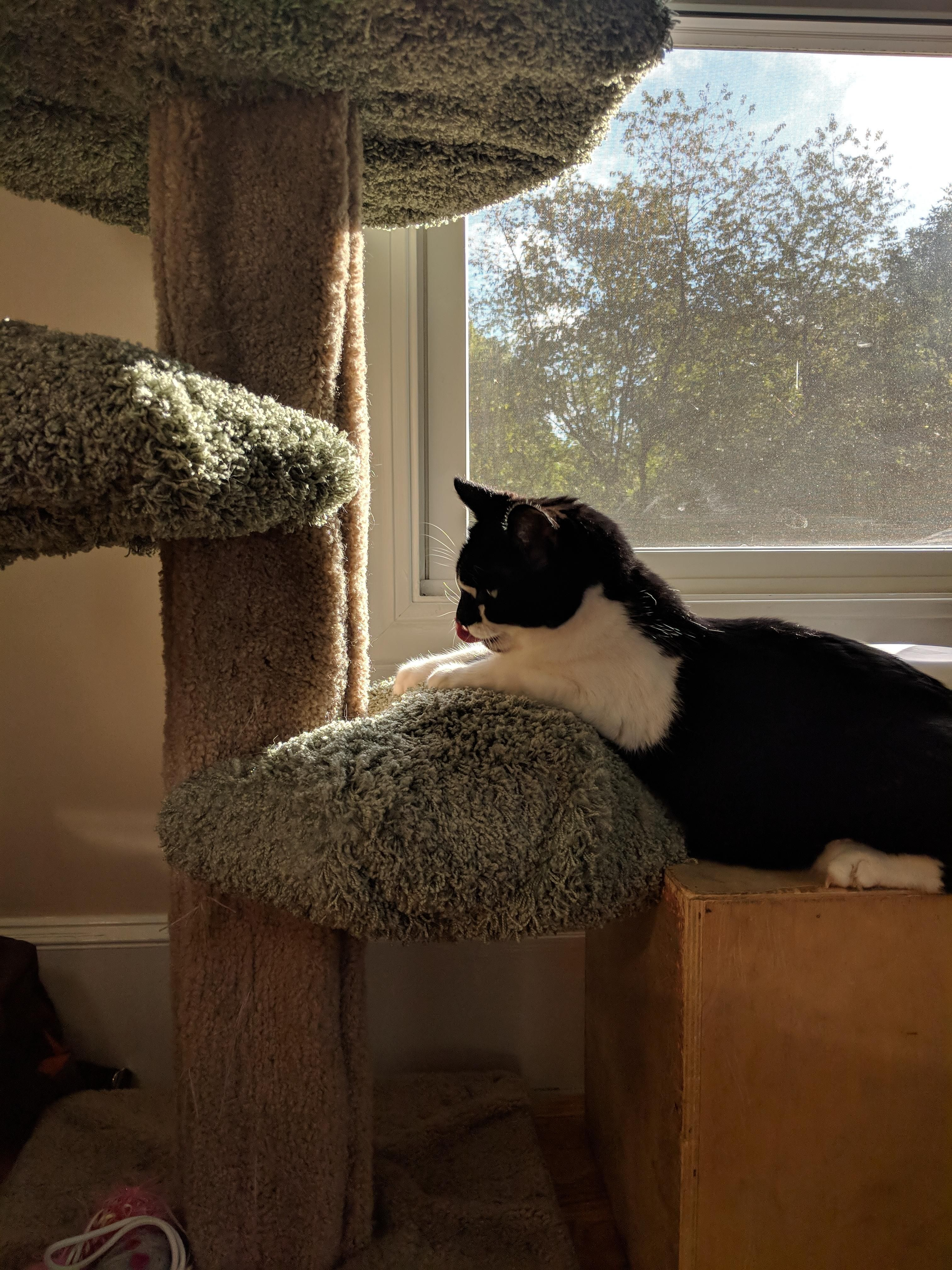 Had this cat tree for over 10 years had this beutiful