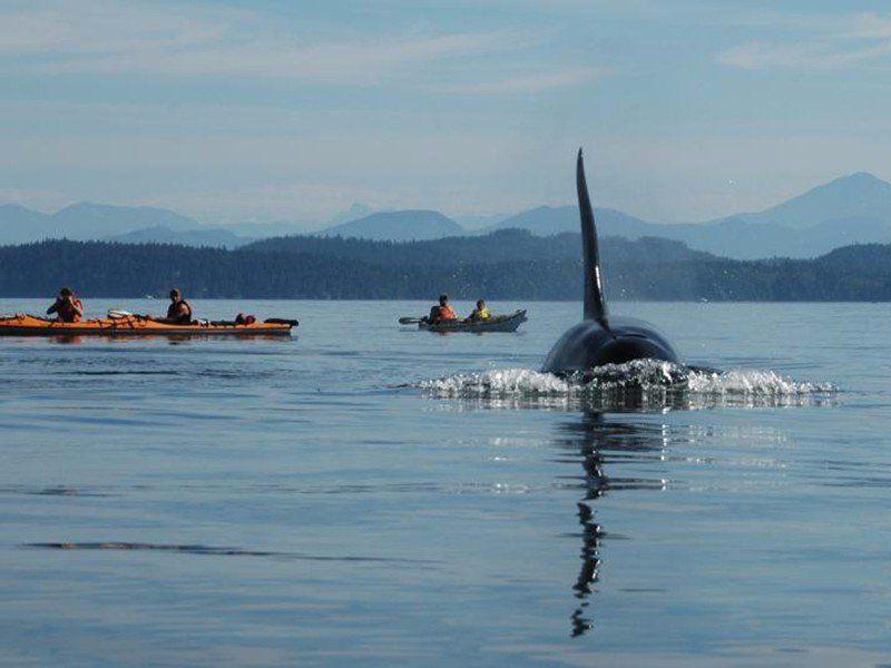 Top 9 Outdoor Adventures in the Pacific Northwest
