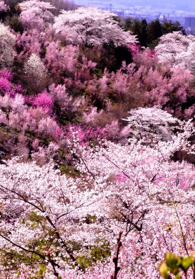 Springtime In Japan Inspire We Trust Cherry Tree Japan Nature Art