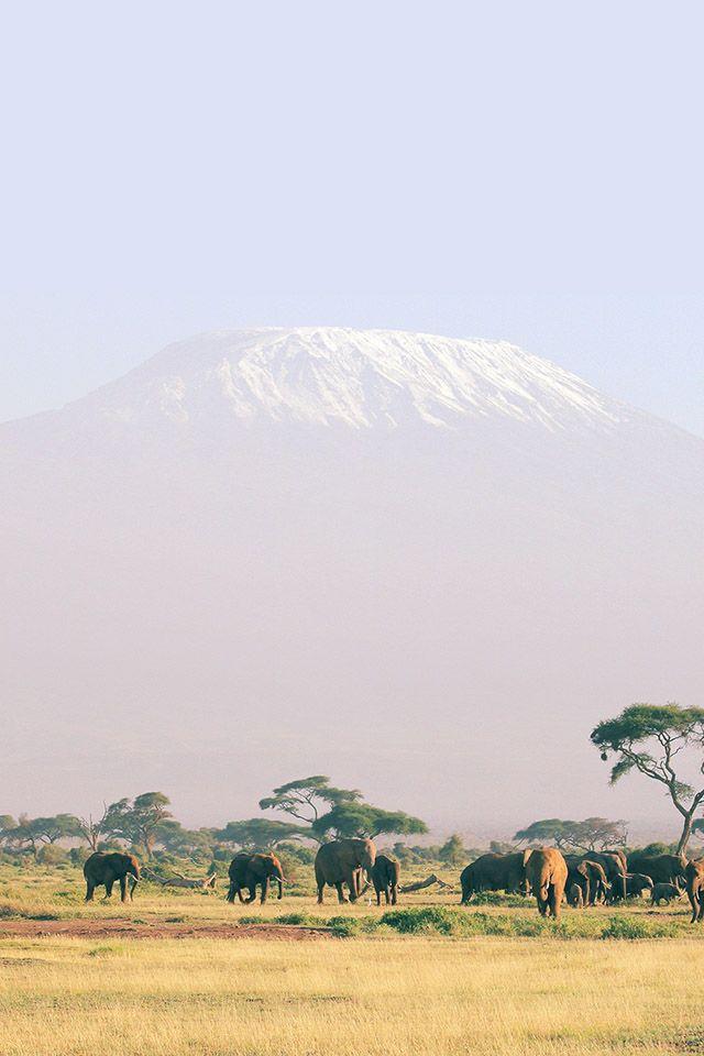Freeios7 Africa Safari Elephant Freeios7 Com In 2019