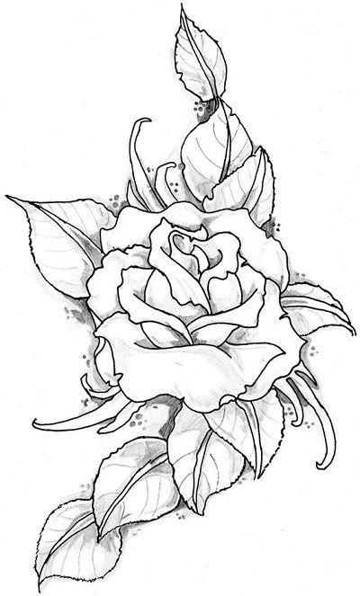 Menggambar Bunga Mawar : menggambar, bunga, mawar, Gambar, Sketsa, Bunga, Mawar, Sketsa,, Halaman, Mewarnai,, Menggambar