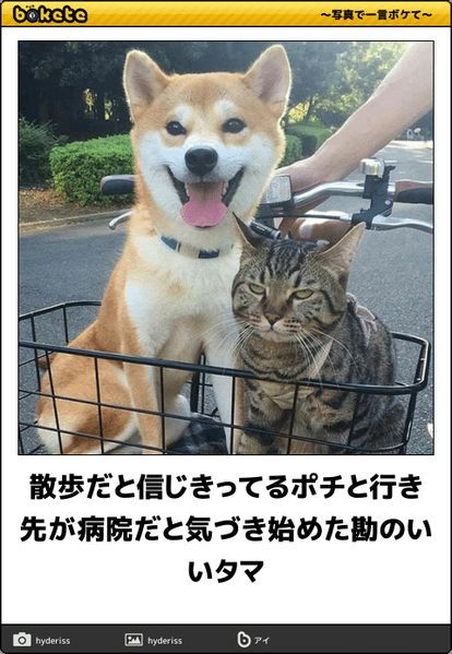 Pin By Oritan Gogo On 写真で一言 ボケて Funny Animal Pictures Cute Funny Animals Funny Animals