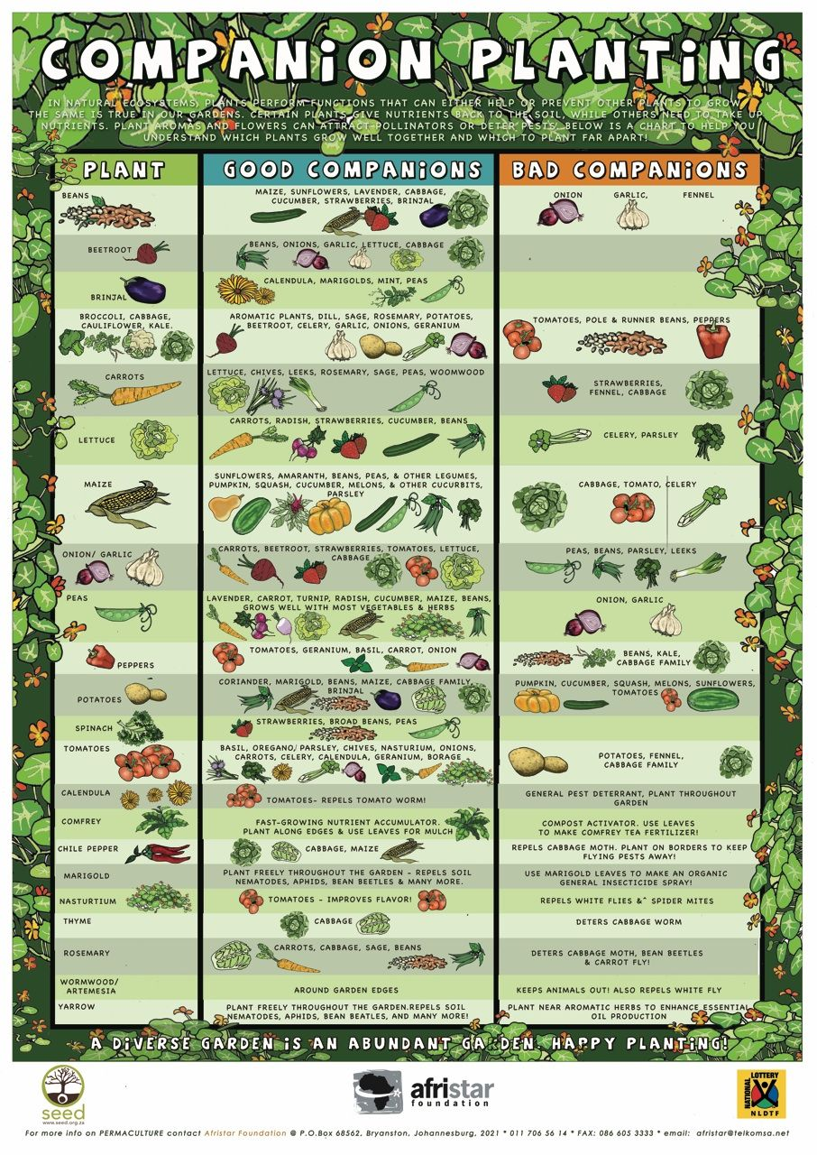 Die Grundlagen der Permakultur – Sample Companion Planting Chart
