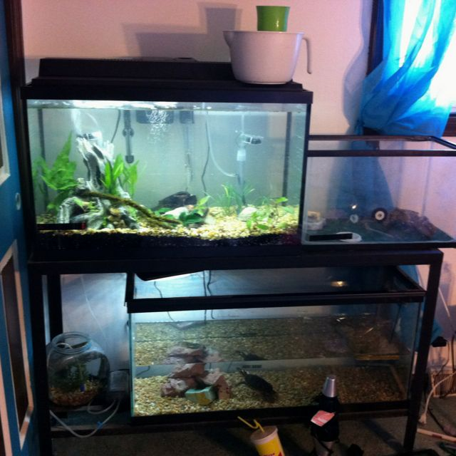 My new setup 55 gallon stand 29 gallon aquarium up top for 55 gallon corner fish tank