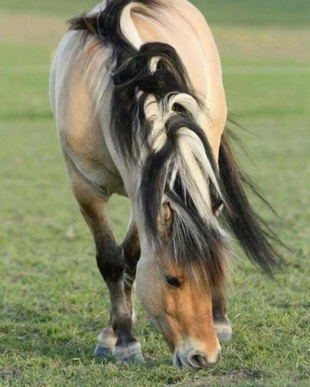 L Air Du Paradis Est Celui Qui Souffle Entre Les Oreilles D Un Cheval Horse Cheval Nature Horsephotography Cheval Fjord Chevaux Sauvages Beaux Chevaux