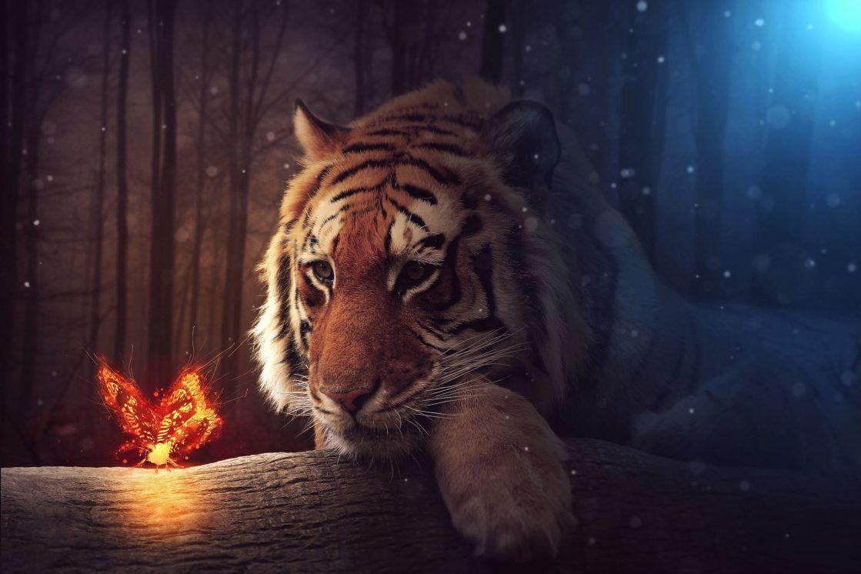 Tigre Feerie Fairy Tiger Voyage Onirique En 2020 Art Tigre Animales Felin