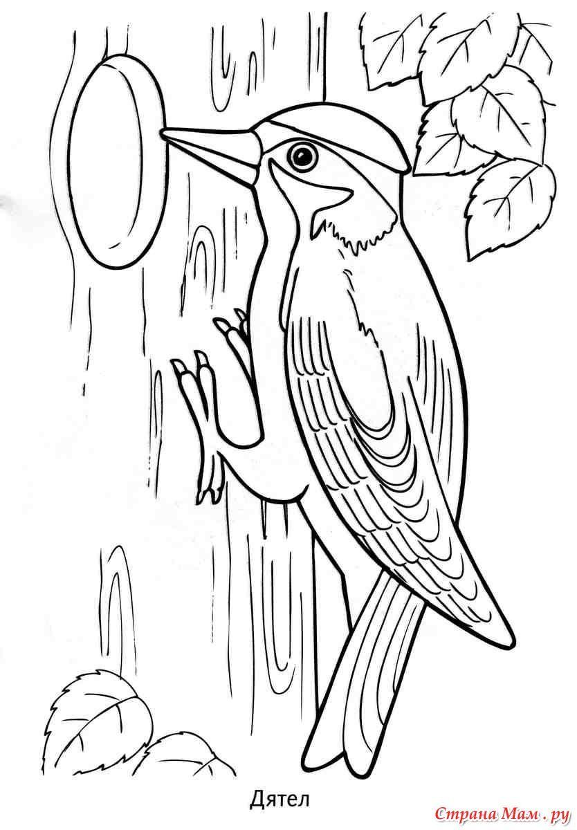 Зимующие птицы | Раскраски, Раскраски с животными, Роспись ...