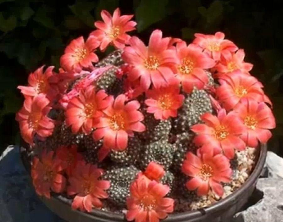 Descubriendo Las Suculentas E Imágenes Para Reconocerlas Suculentas Plantas Crasas Mini Cactus