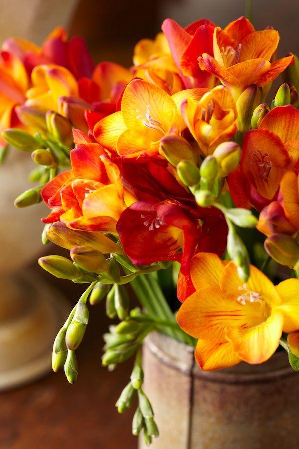 Tuscan Floral Window Tulipina Beautiful Flowers Freesia Flowers Flowers