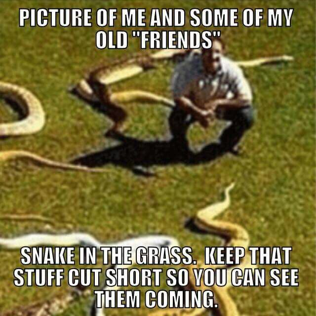 Beware Of Snake Friends Friends Quotes All Quotes Quotes