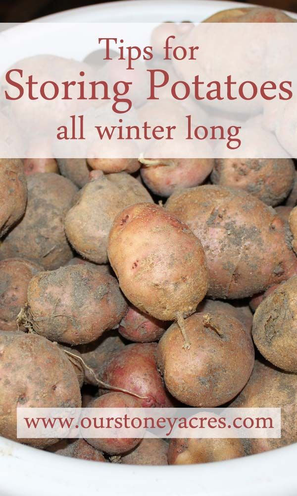 tips storing potatoes winter