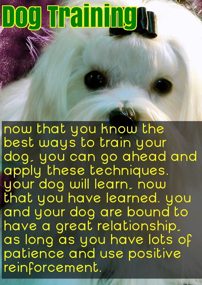A Troubled Dog Is Usually A Bored Dog Dog Care Tips Training