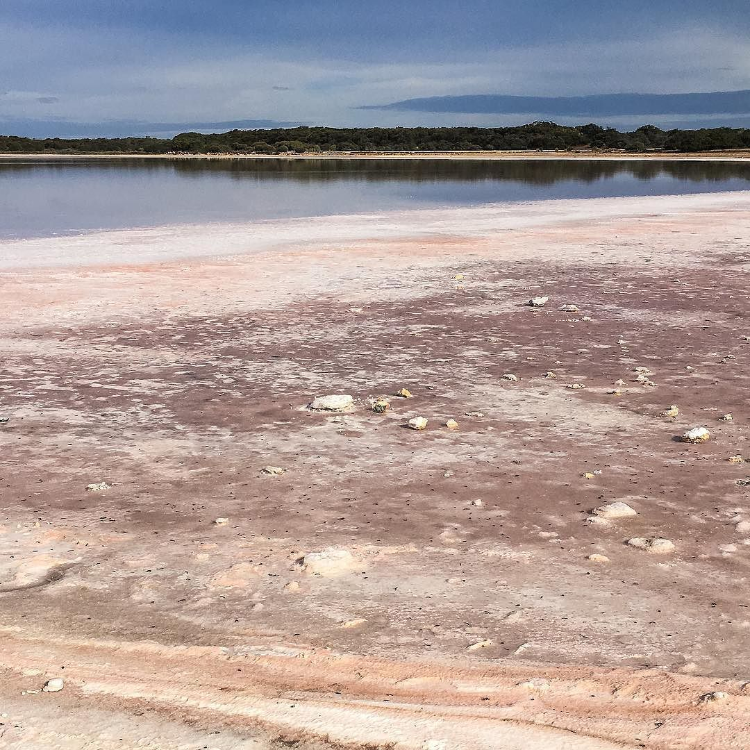 Halite Lake alongside The Coorong has a pink-tinged shoreline due to the precipitation of salts and microbial matter in the lake.  #OCGontour #oncirculation #geology #science #earthscience #fieldwork #fieldtrip #seeaustralia #southaustralia #saltlake #lake#geologyrocks #limestone #sedimentary #australia #nature #landscape #landscape_captures #greatoceanroad #earthscience #rsa_nature #awesomeearth #worldcaptures #earthpix #natureaddict #global_hotshoz #justgoshoot #vscoedit #vscocam #coast by…
