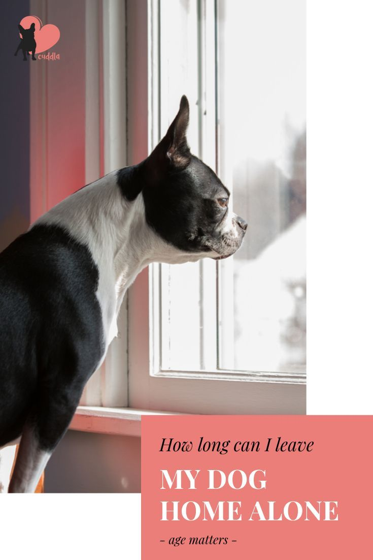 How Long Can I Leave My Dog Alone And How To Do It Dogs Dog Parents Dog Ages