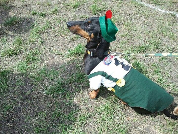 Brewers Racing Sausage Dachshund Derby Costume Contest