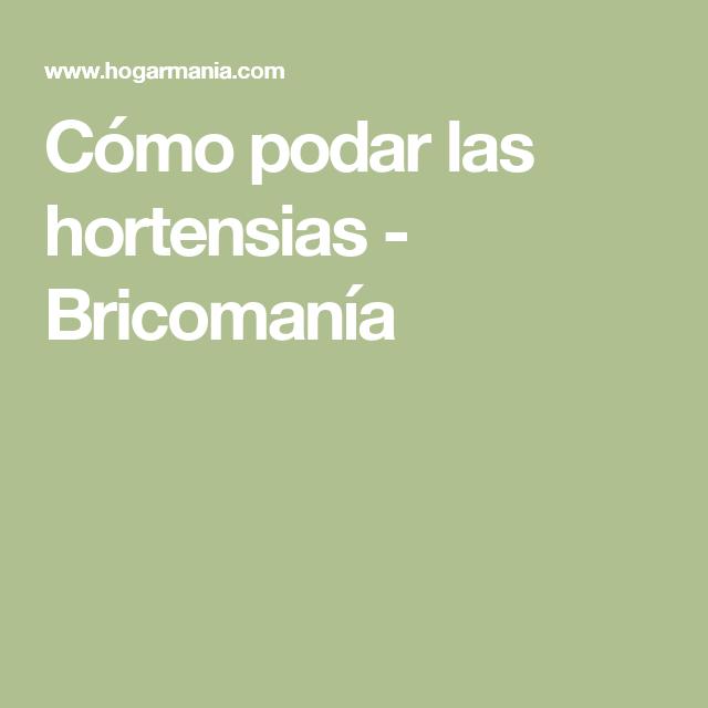 C mo podar las hortensias huerta hortensias cuidado - Hortensias cuidados poda ...