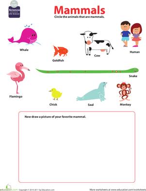 mammals for kids places to visit. Black Bedroom Furniture Sets. Home Design Ideas