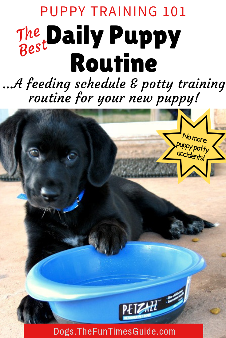 A Dog Routine For New Dog Owners Why How To Come Up With A Puppy Feeding Schedule And Potty Routine For Your Dog Puppy Feeding Schedule Puppy Schedule Potty Training