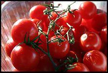Cucina siciliana - pomidoro siciliani di Pachino