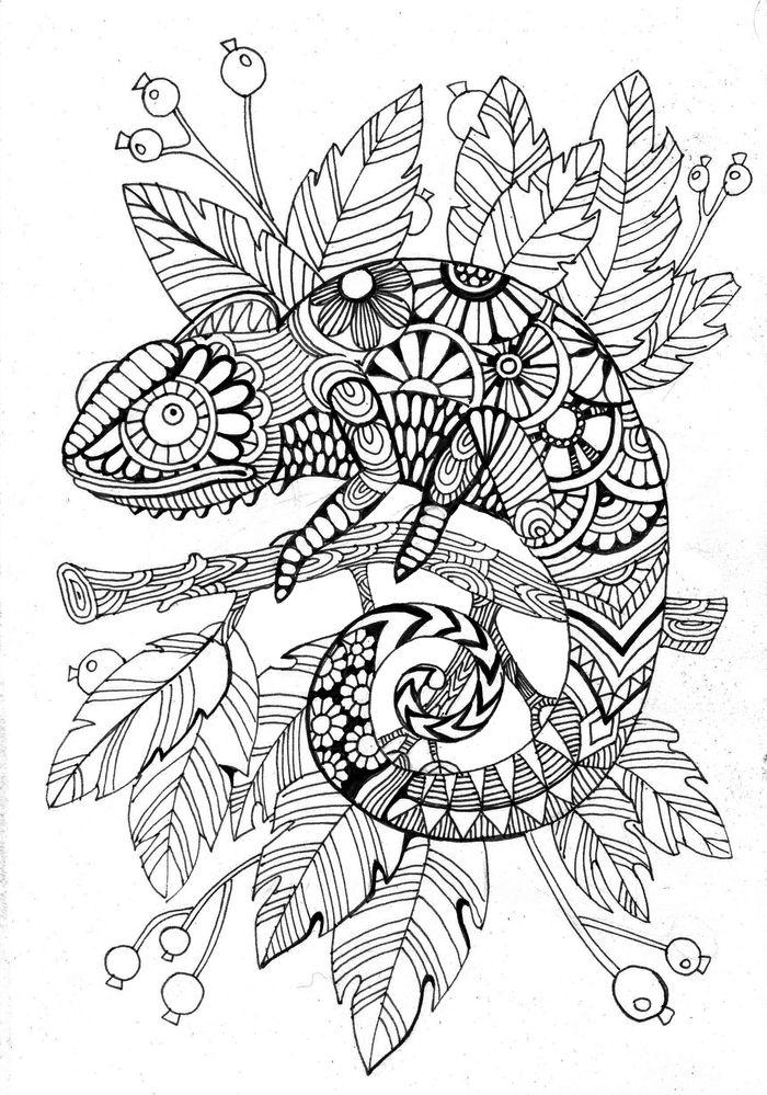 Cameleon Coloring Page Raskraski Illyustracii Folk Art Kartiny Risunki