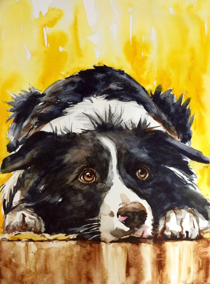 Watercolor On Paper 27x35 Cm Border Collie Dog Drawing Dog Paintings Dog Art