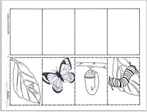Álbumes web de Picasa | mariposa | Secuencia, Secuencias temporales ...