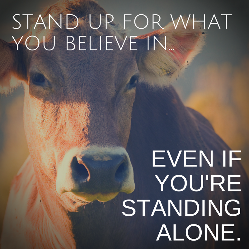 Pinterest Animal Quotes: Human Freedom Animal Rights One Struggle One Fight