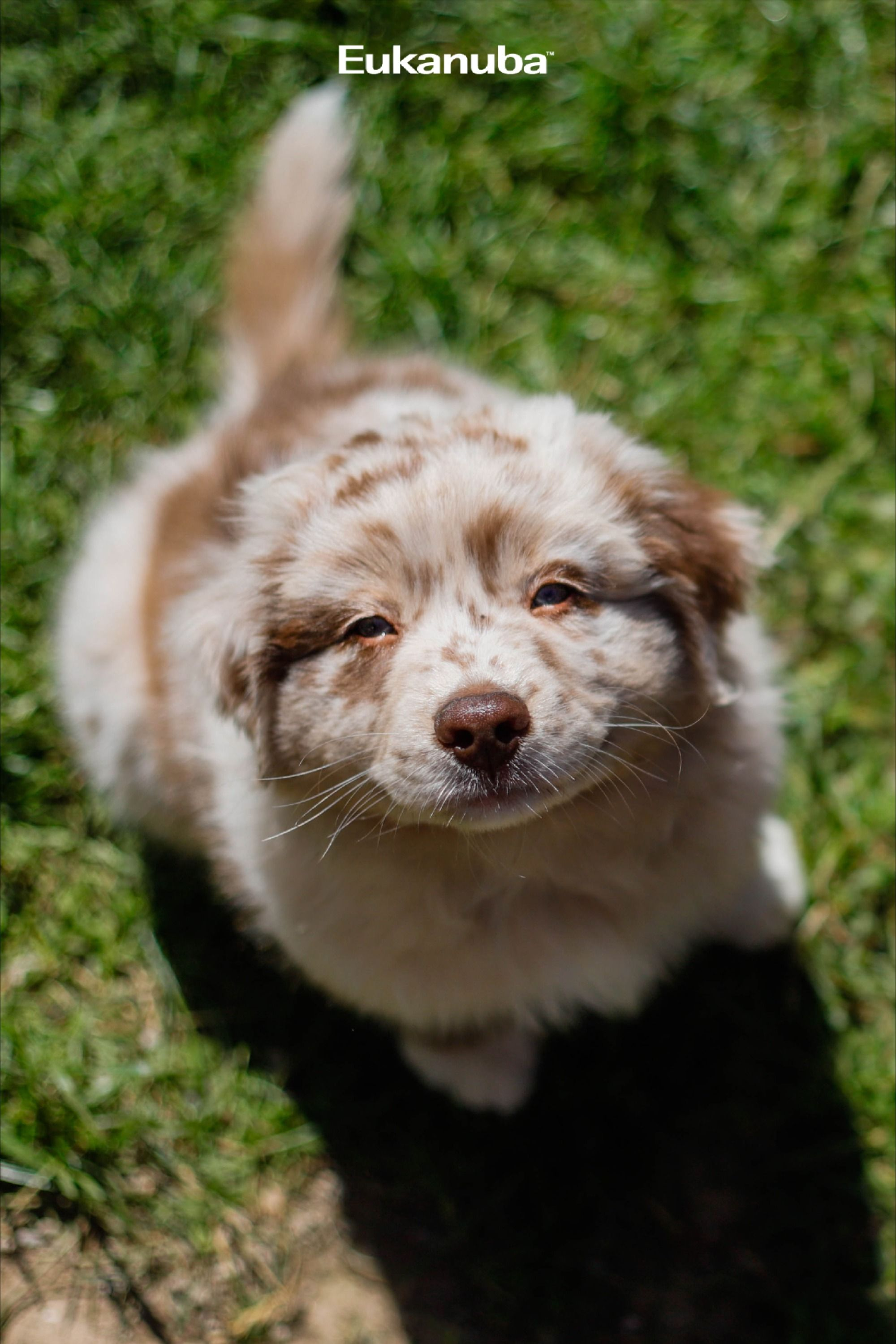 Benefits Of Mixed Feeding In 2020 Cute Funny Animals Really Cute Dogs Baby Animals Pictures